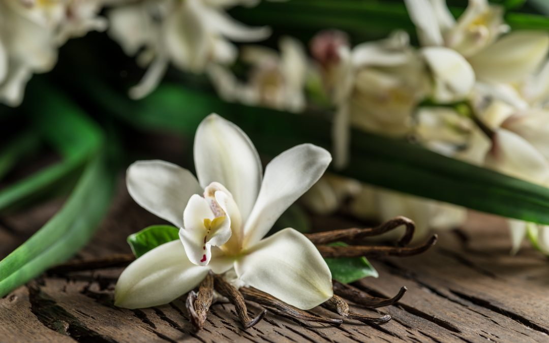 Bakuchiol: new clinical study in combination with Vanilla tahitensis extract